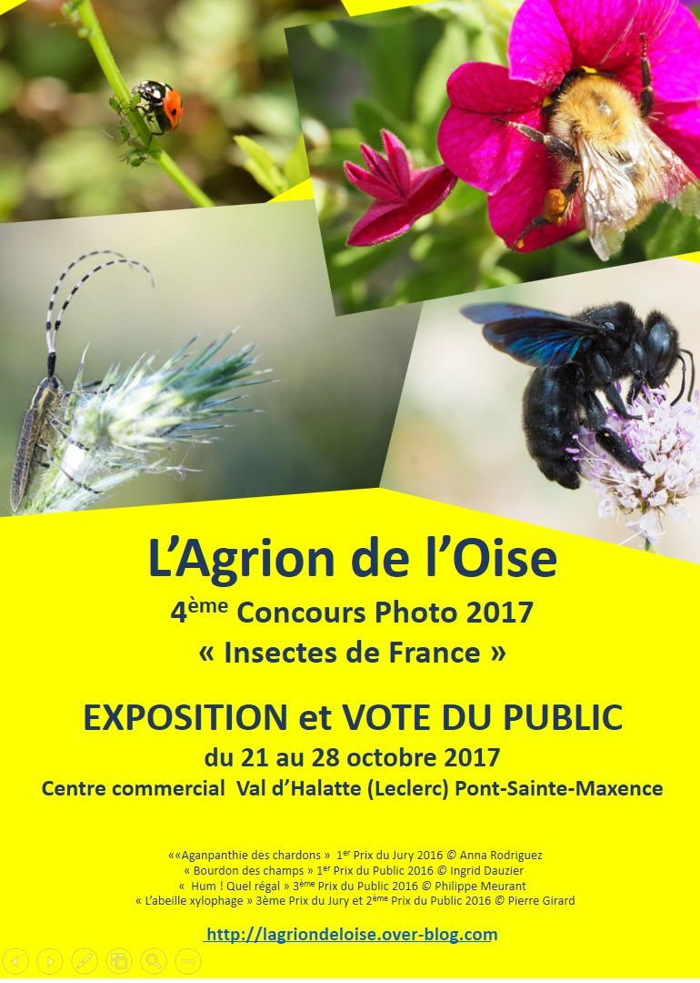 Le point sur le concours photo &quot&#x3B;Insectes de France&quot&#x3B; 2017