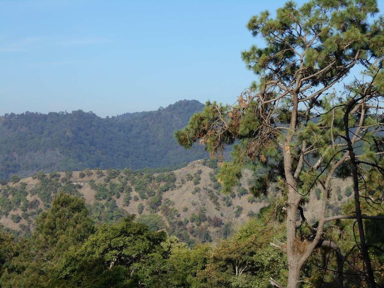 A VTT dans la forêt de pins mexicaine : que d'admirables panoramas