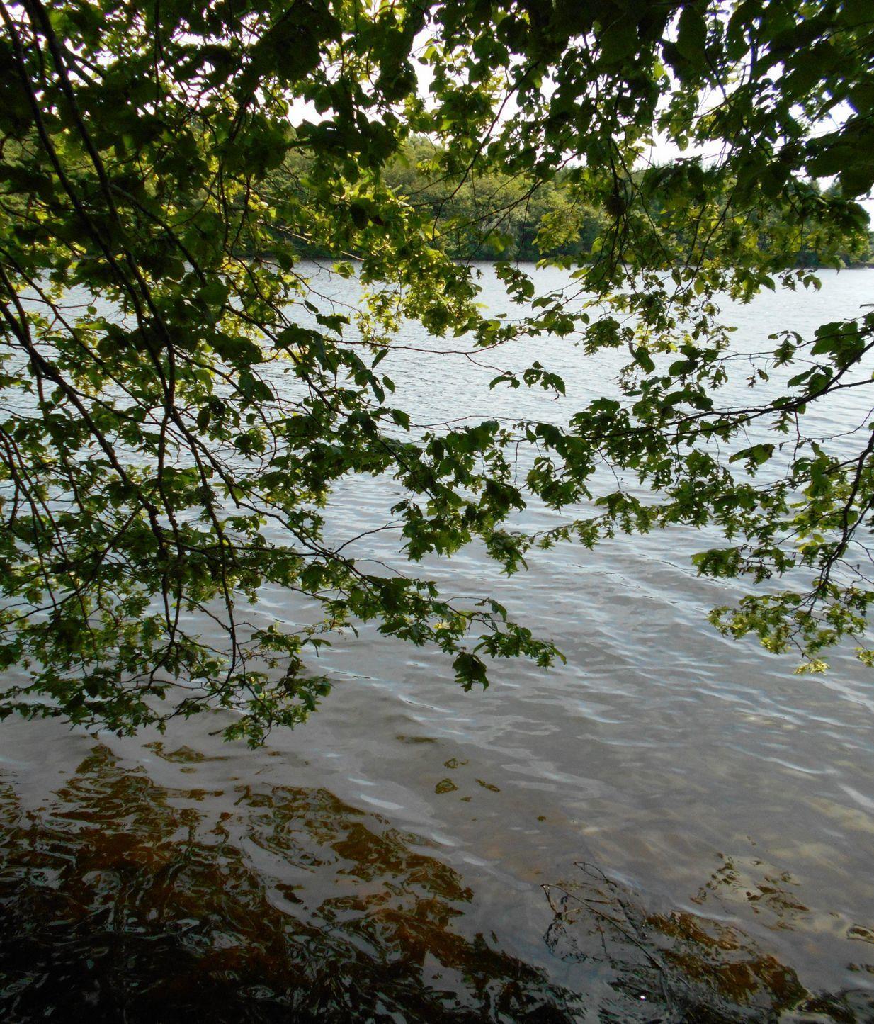 Paradis secret : mon bel étang bourguignon