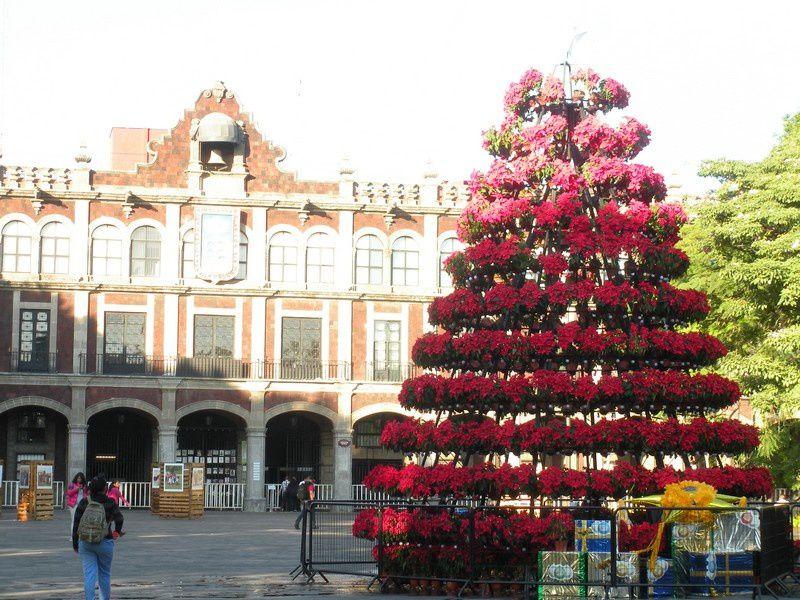 Aux couleurs du père Noël et de la Noche Buena, l'arbre de Navidad de Cuernavaca