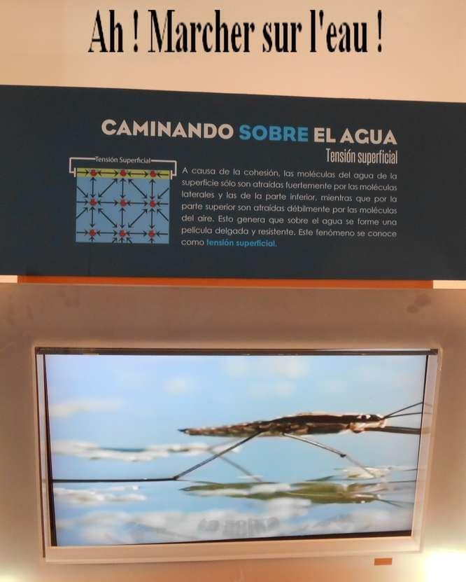 Une bonne sensibilisation à l'environnement au parc écologique Acapantzingo