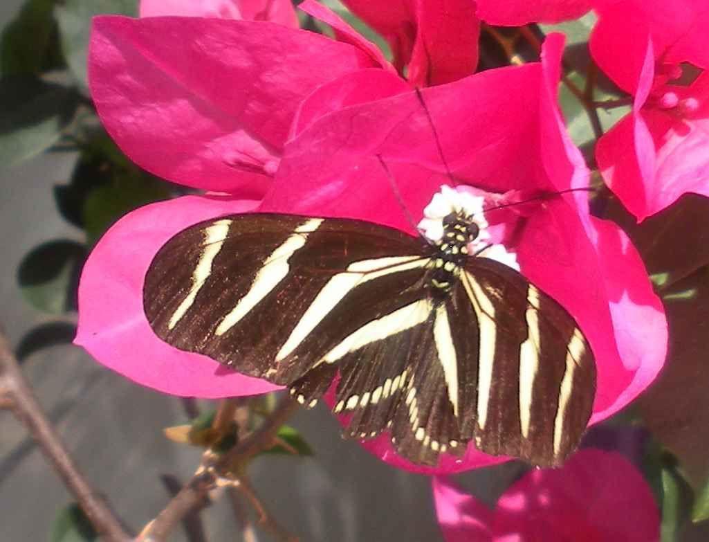 Article complèté - A la chasse (photo) aux papillons du parc écologique de Cuernavaca