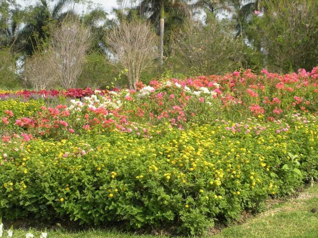 Ravissement au jardin des quatre printemps et à l'éventail de fleurs au  sud de Morelos