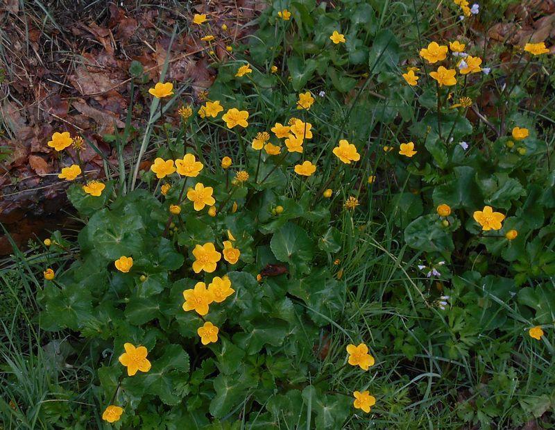 Quelques échantillons des fleurs du bas-côté au printemps