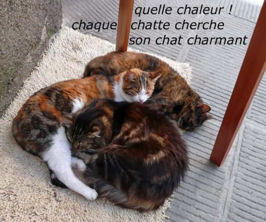 Chattes...