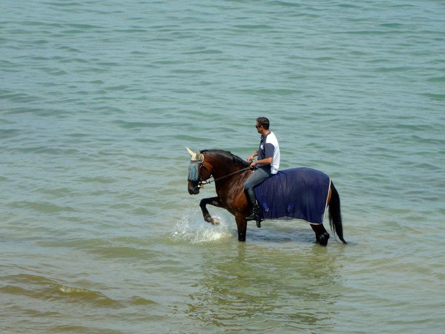 Lac de Constance...