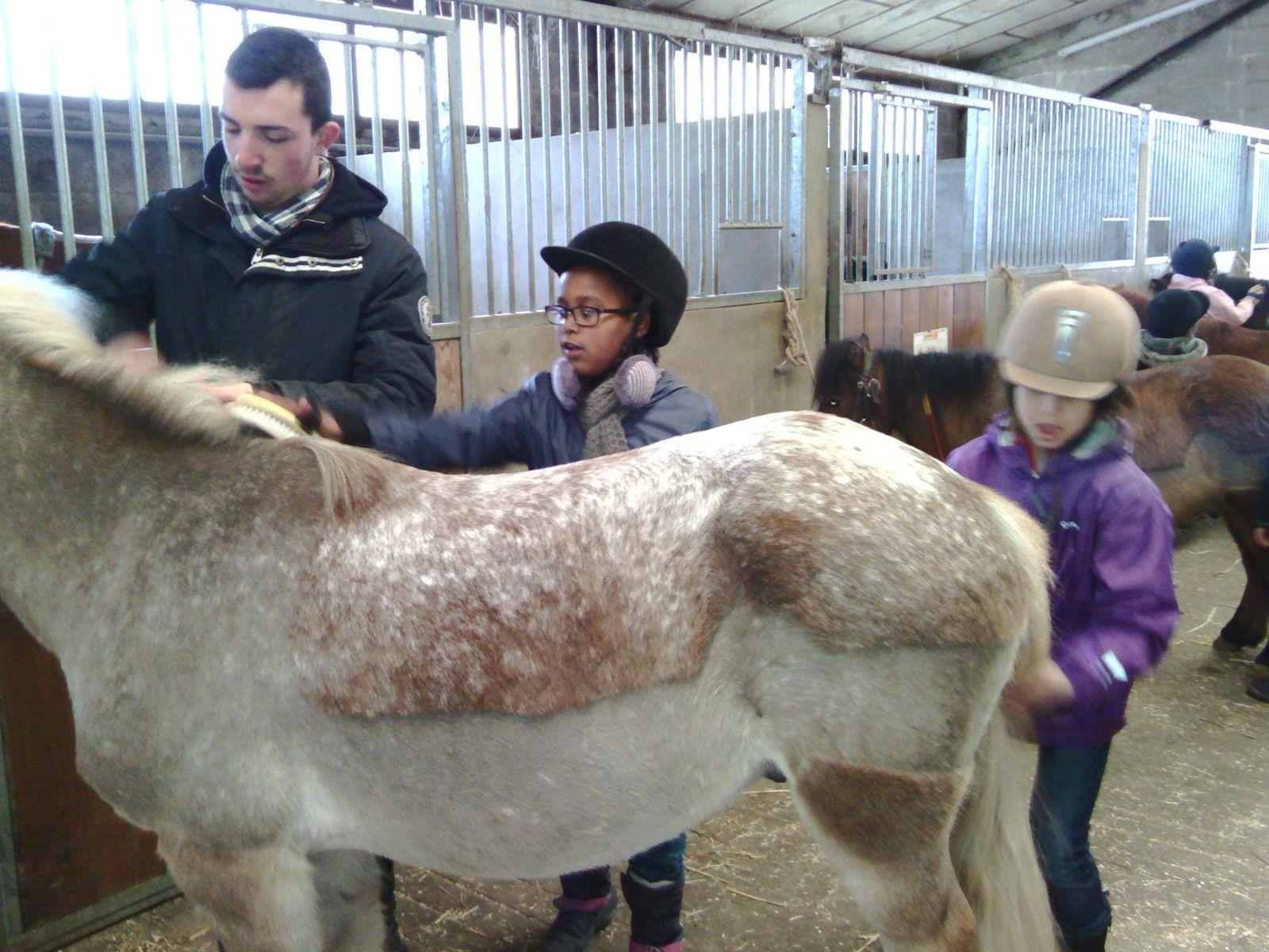 Sortie poney pour les Elems