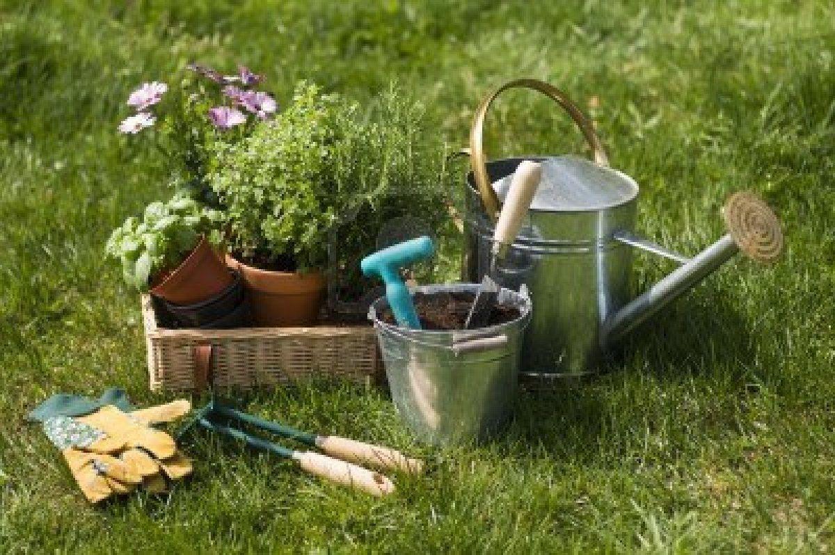 conseil en jardinage la messipontine