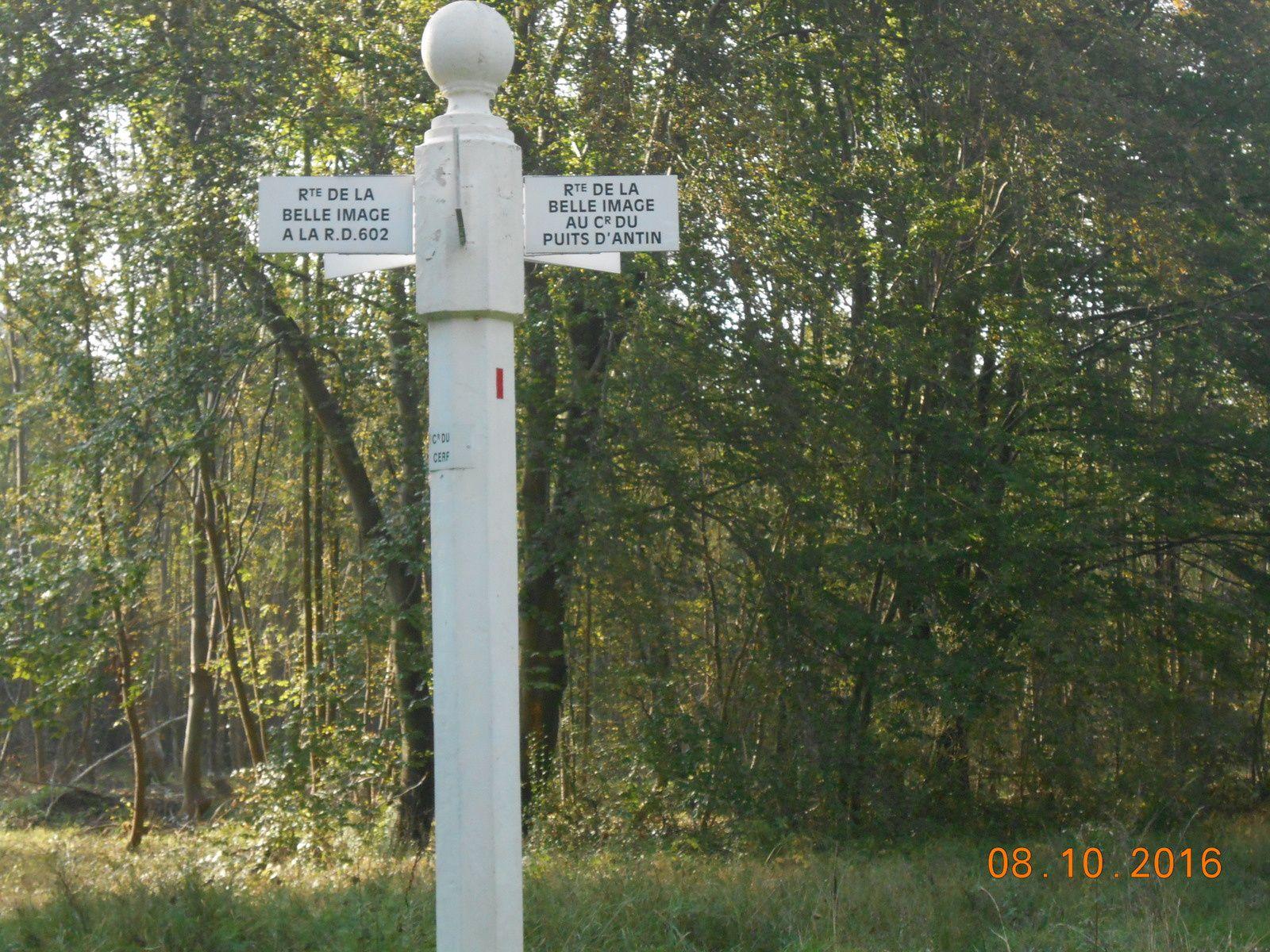 marche au sifflet dans la forêt de Compiègne (12 kms)