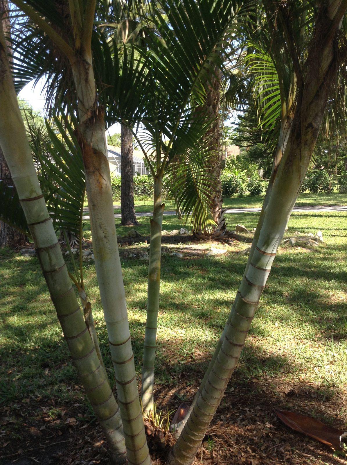 Végétation tropicale, tortues en convalescence, Mister Bunny , magnifique parc et chasse aux oeufs à West Palm Beach.