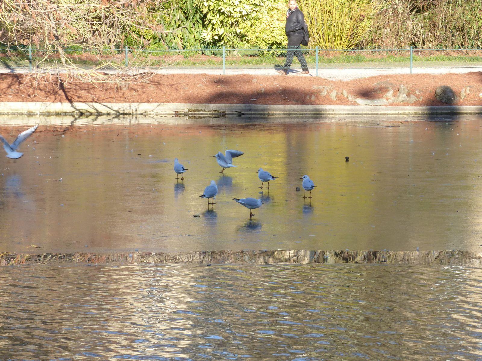 Patinoire au Jardin Public de Bordeaux