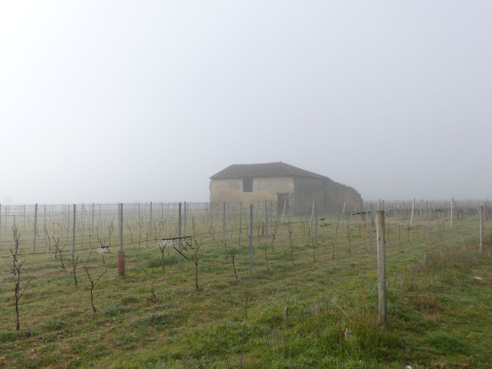 Brouillard du matin.....