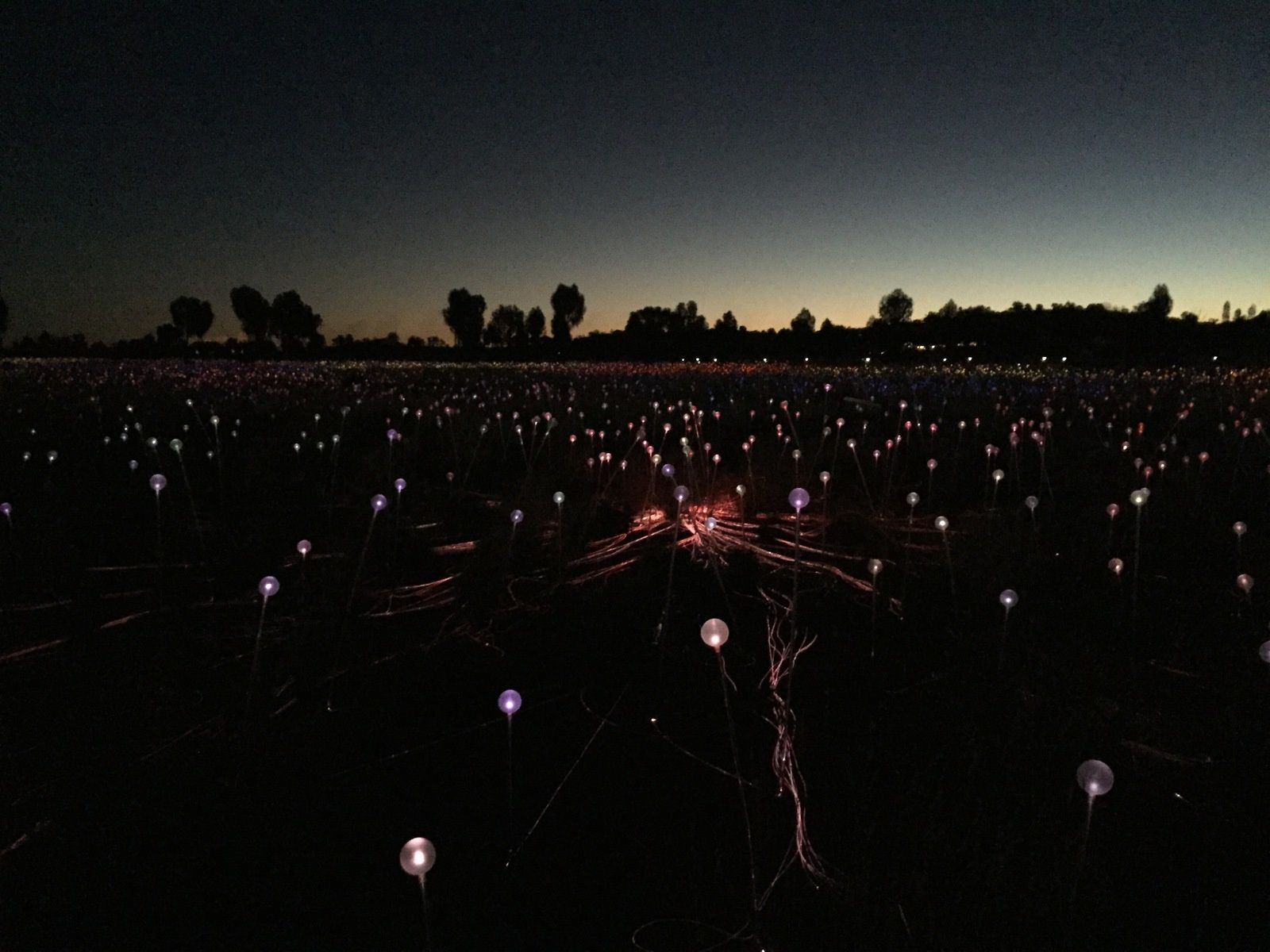 Field of Light / Uluru