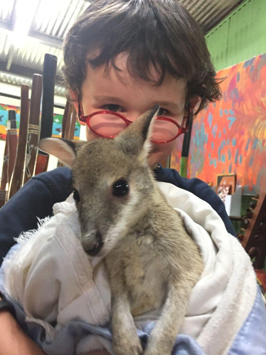 Dessine-moi un kangourou