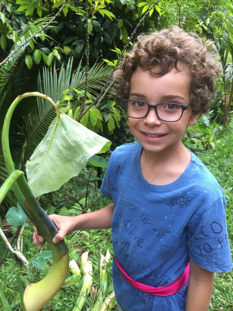 Nous découvrons toutes sortes d'arbres, de plantes et de fleurs qui se cuisinent en Indonésie.