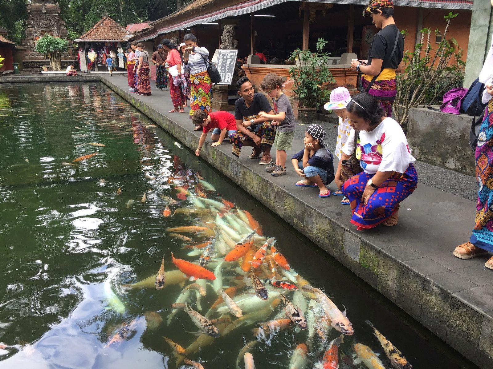Toujours au Tirta Empul, d'énormes poissons rouges impressionnent les garçons. Yanmu, notre chauffeur, est toujours bienveillant envers les garçons.