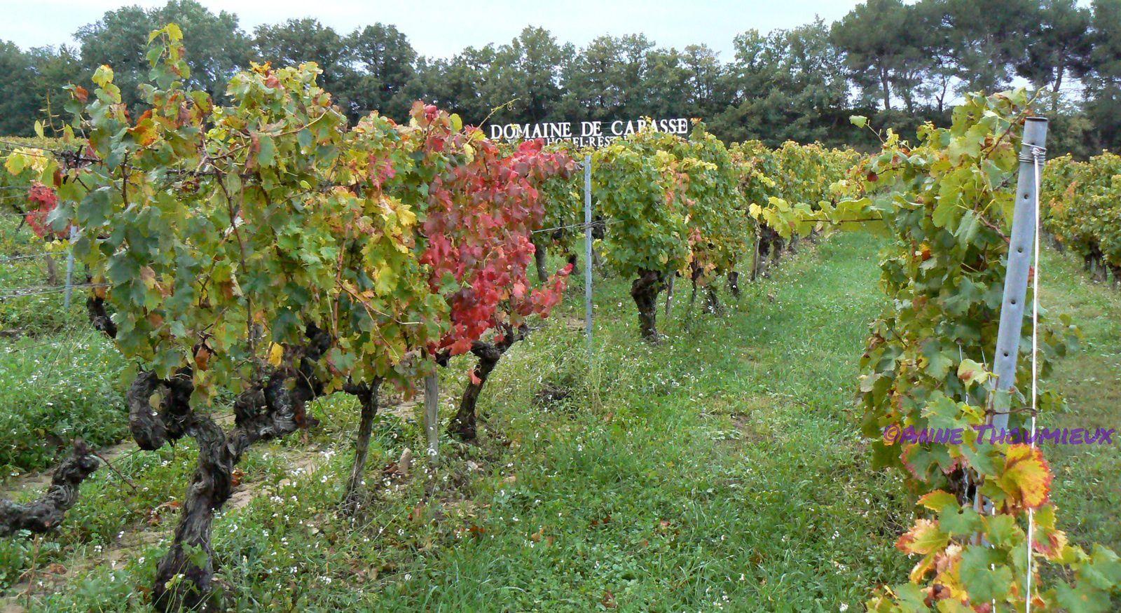 Côtes du Rhône, truffes et oenotourisme