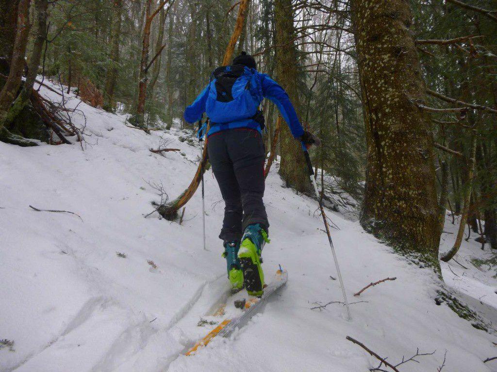 Dans le bois ...ca paaaaaaassssse à ski .... à la montée seulement