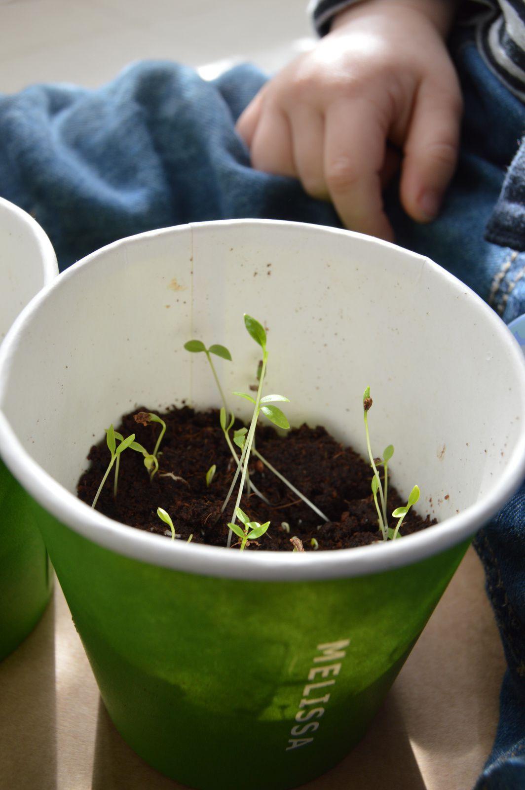Nos petites graines qui poussent