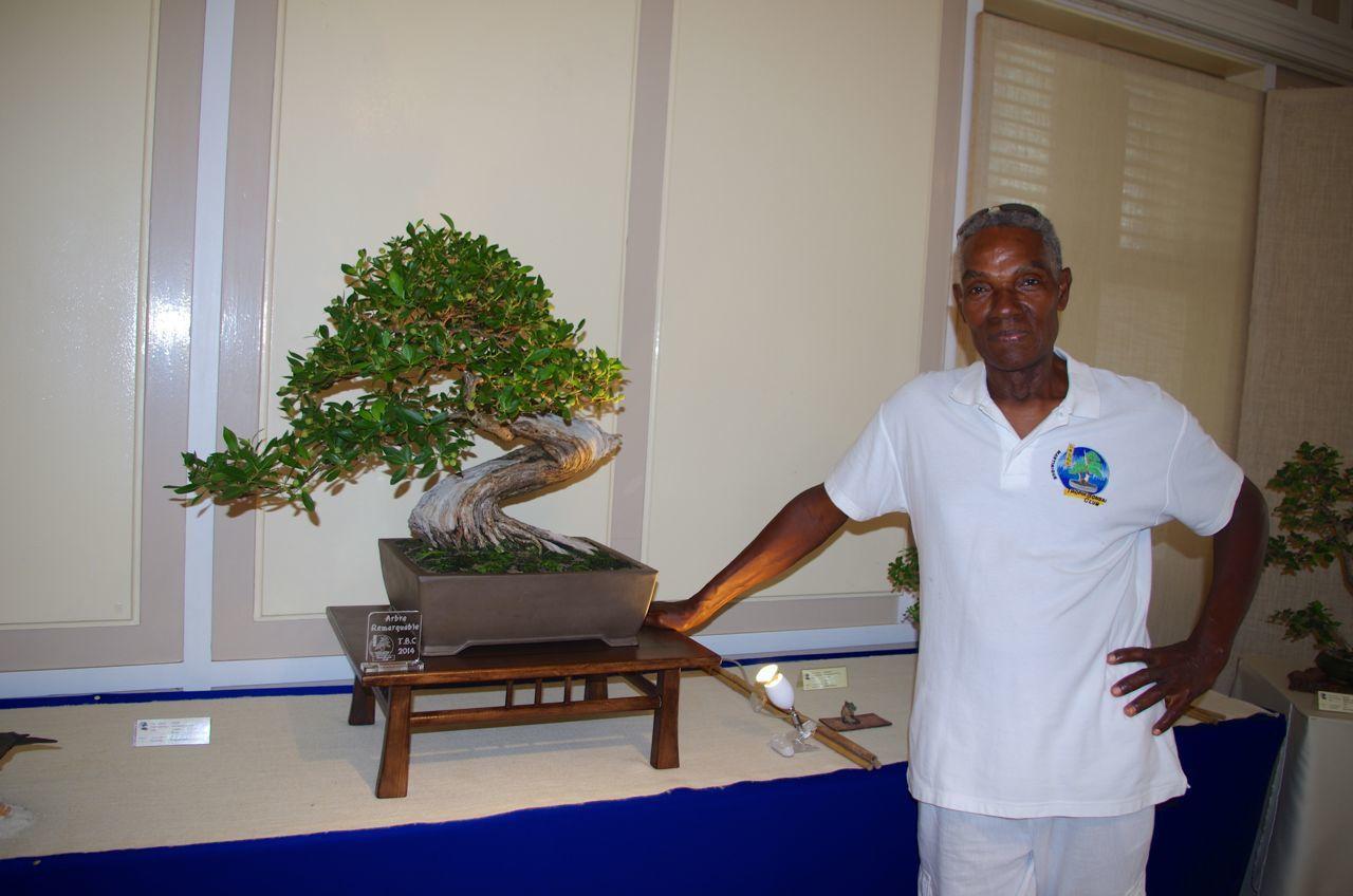 arbre remarquable 2014, mangle torsadé, Bankan Conocarpus erectus, 2011, à François DAMBO