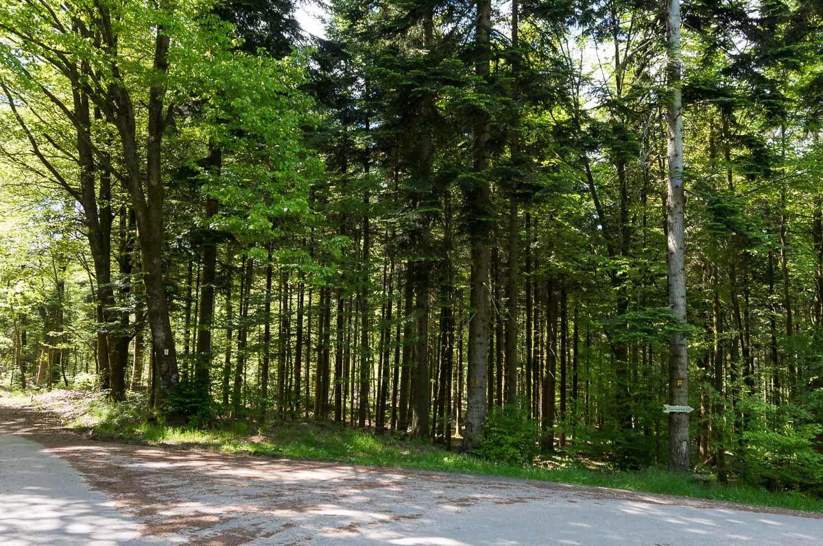 BRUYERES-VOSGES : en passant par les Quatre Chemins et le Monument Américain