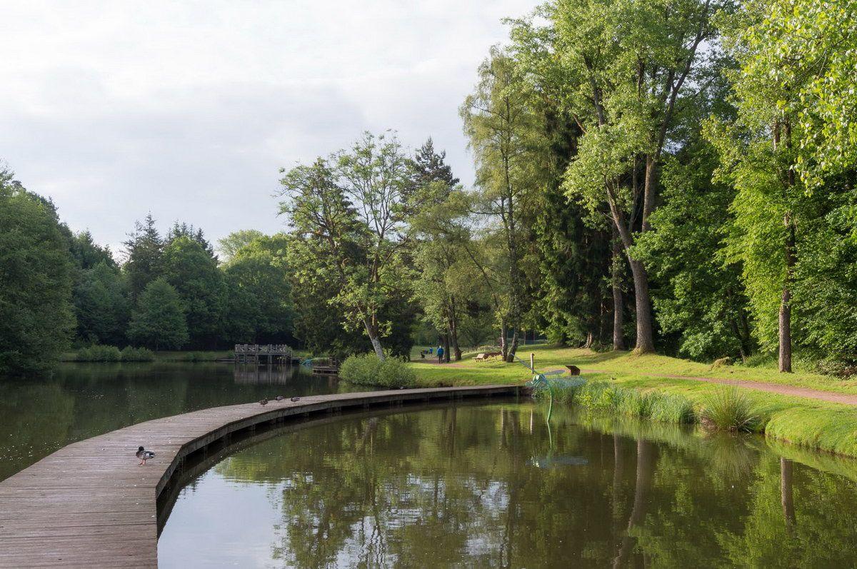 BRUYÈRES-VOSGES : de Fouchon en Avison