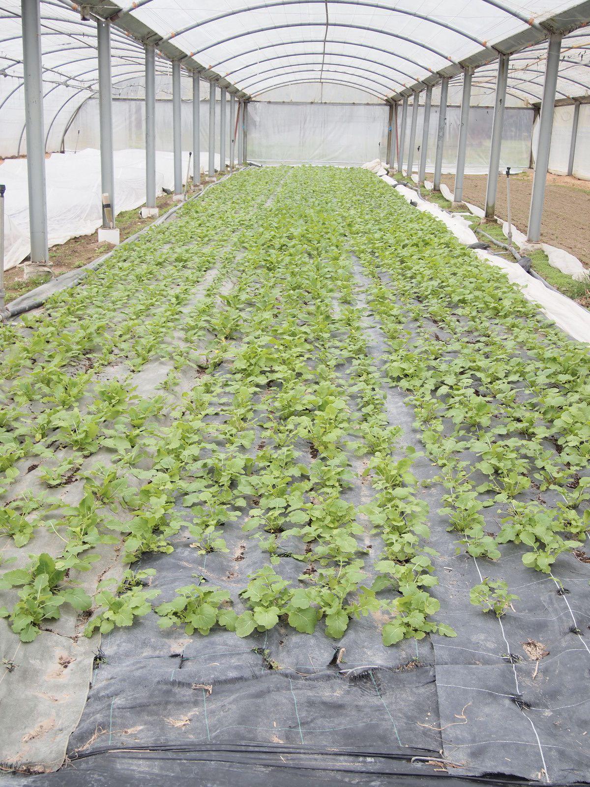 les plantations et semis de printemps l 39 appel du potager. Black Bedroom Furniture Sets. Home Design Ideas