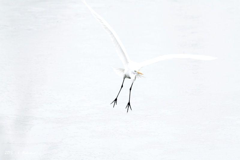 Un peu d'animaux... By Jacky Naëssens