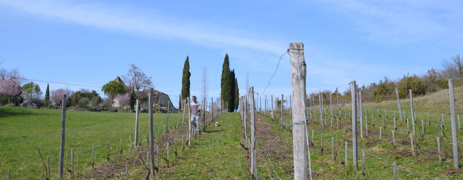 Domaine Les Cyprès - le vignoble
