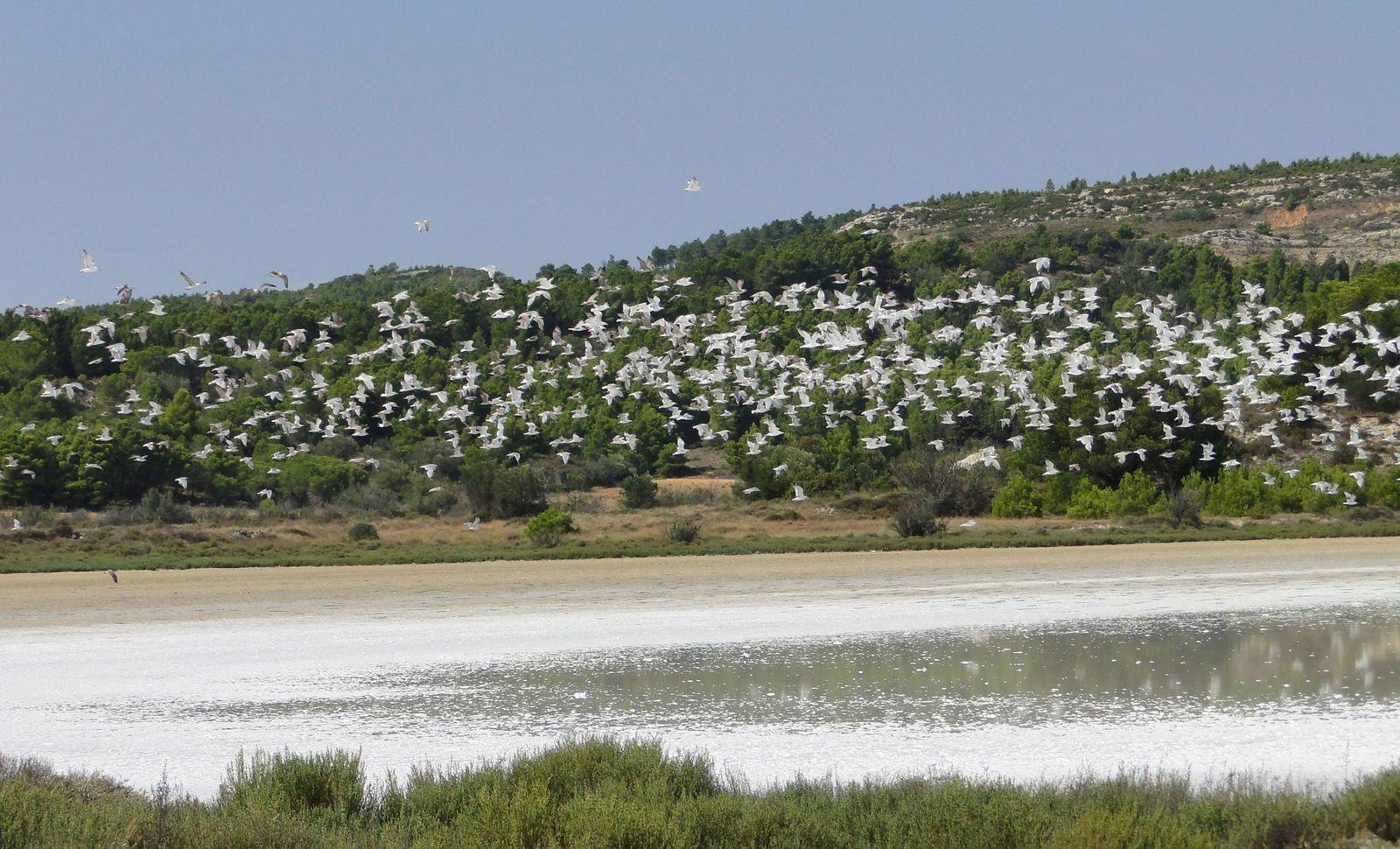 Gruissan - Les étangs de Bages