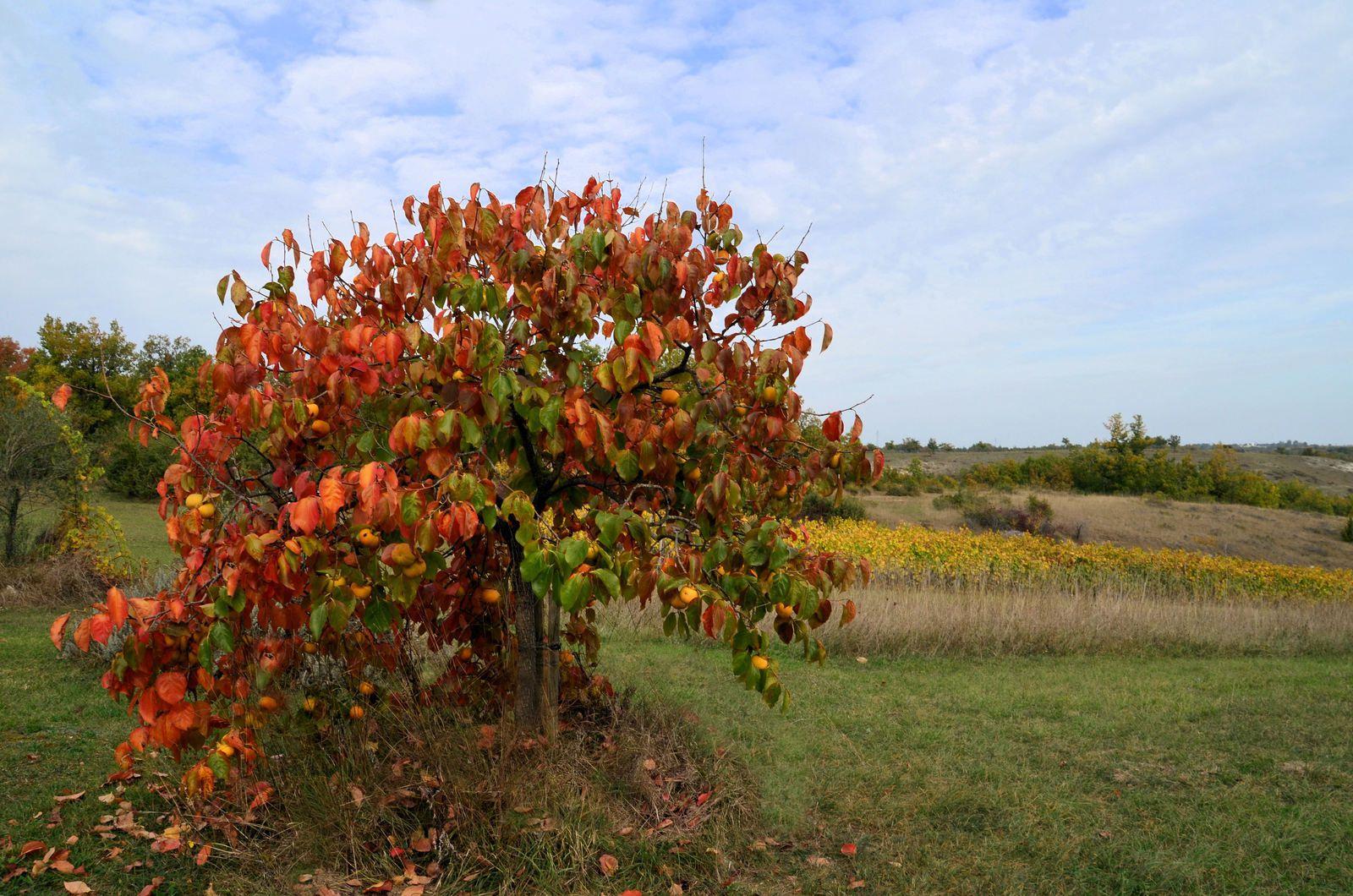 Domaine Les Cyprès - couleurs d'automne
