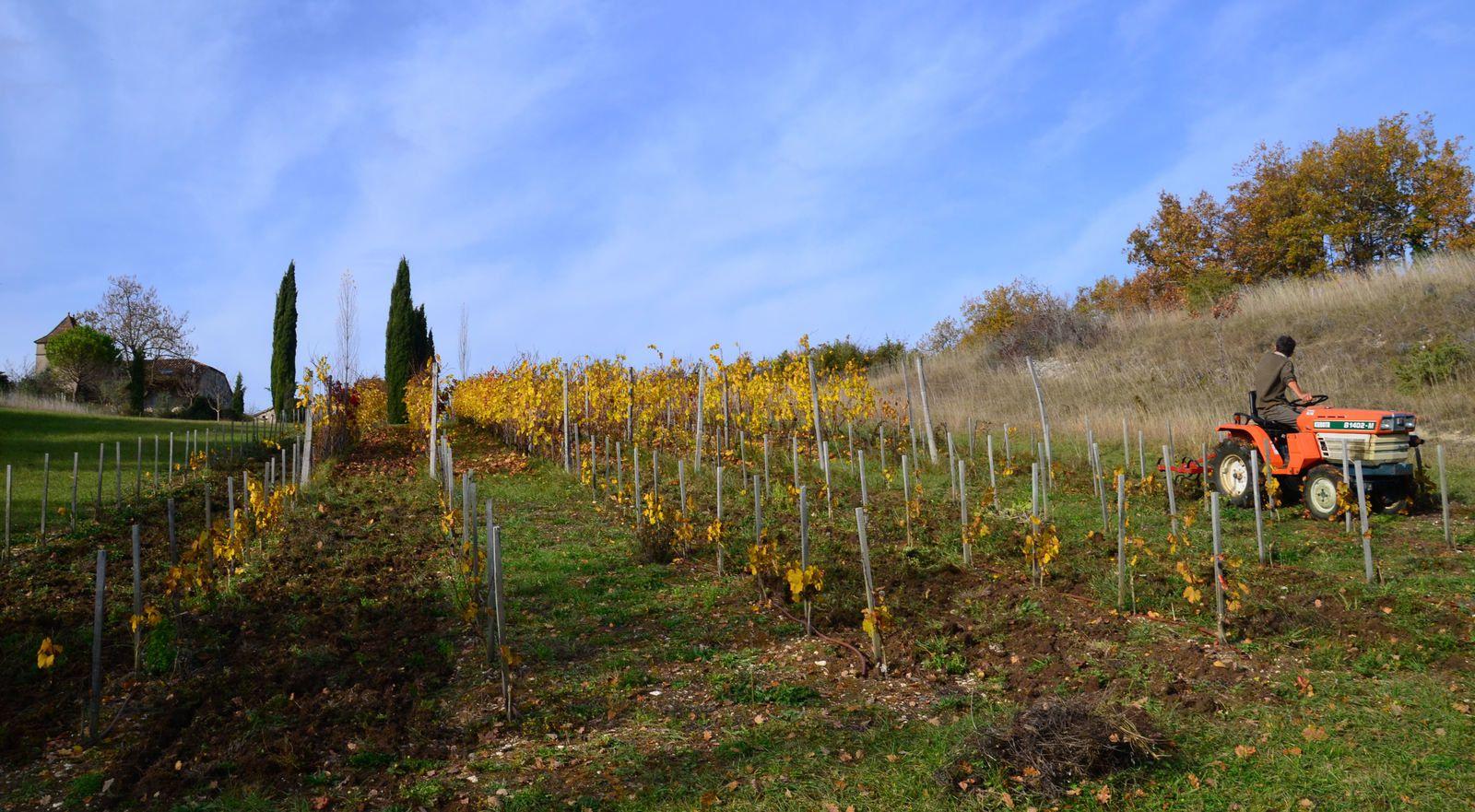 Domaine Les Cyprès - atelier - vignoble