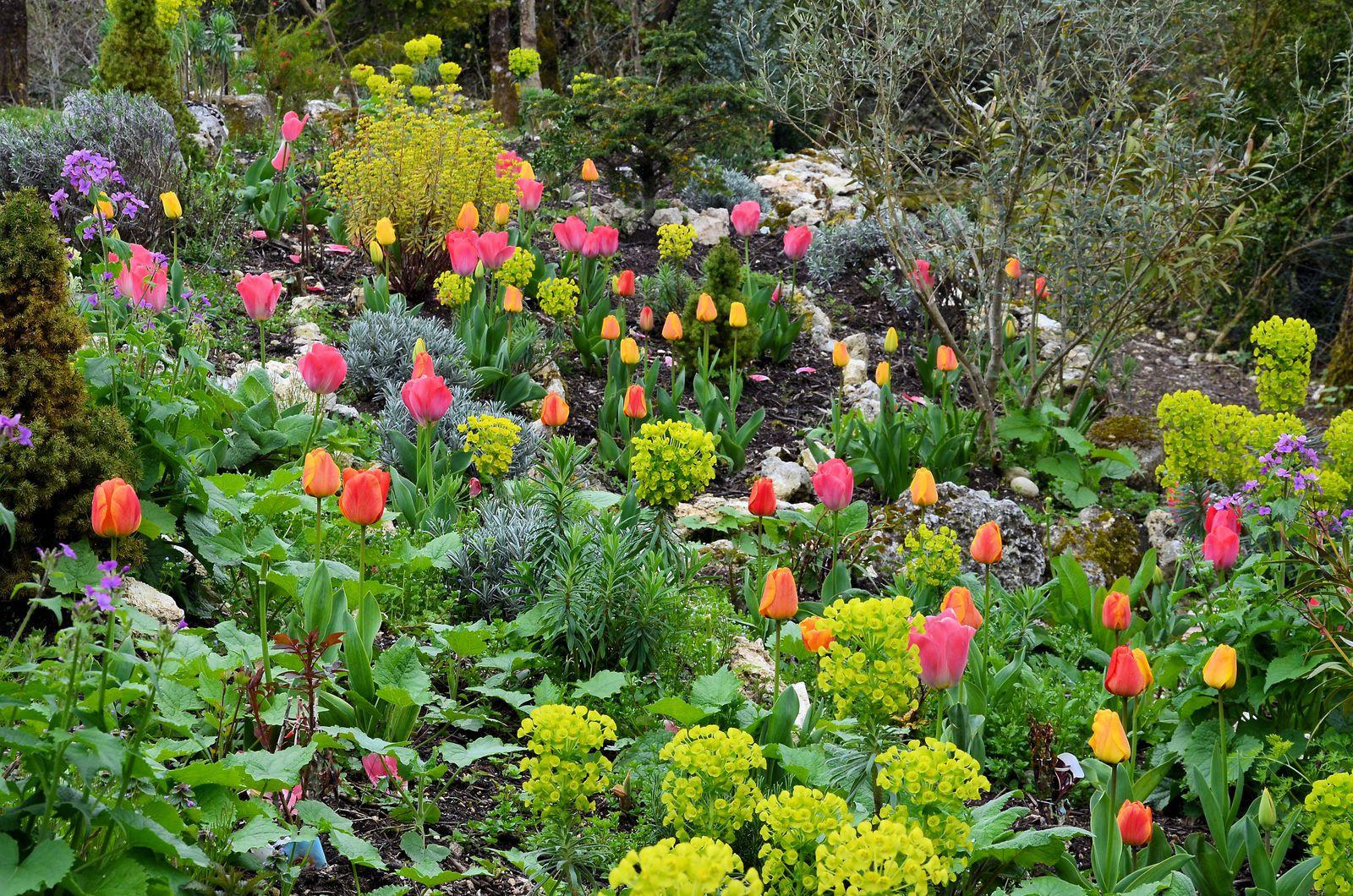 Une ruche dans le jardin - fleurs de printemps