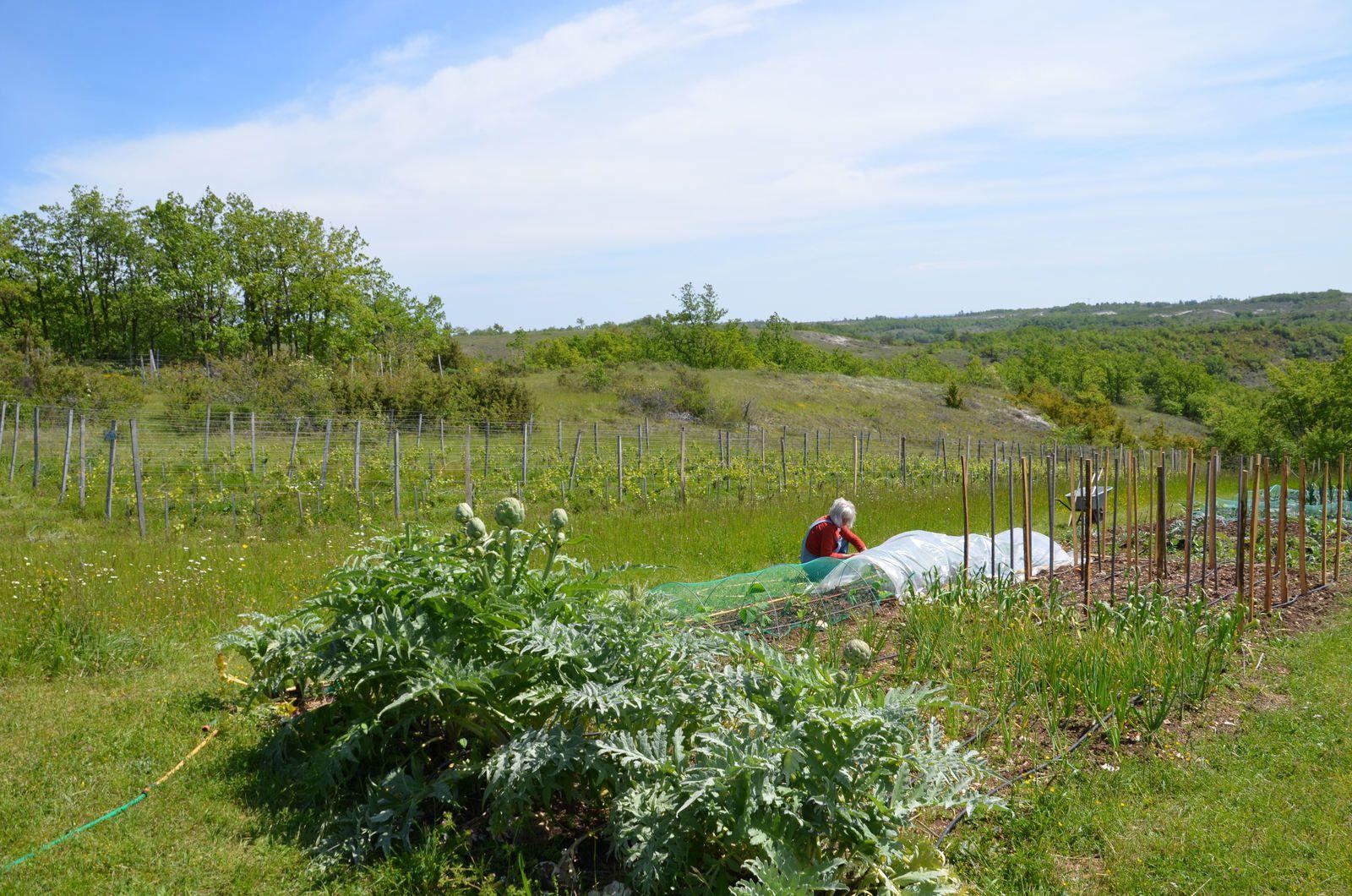 Domaine Les Cyprès - le potager - la vigne