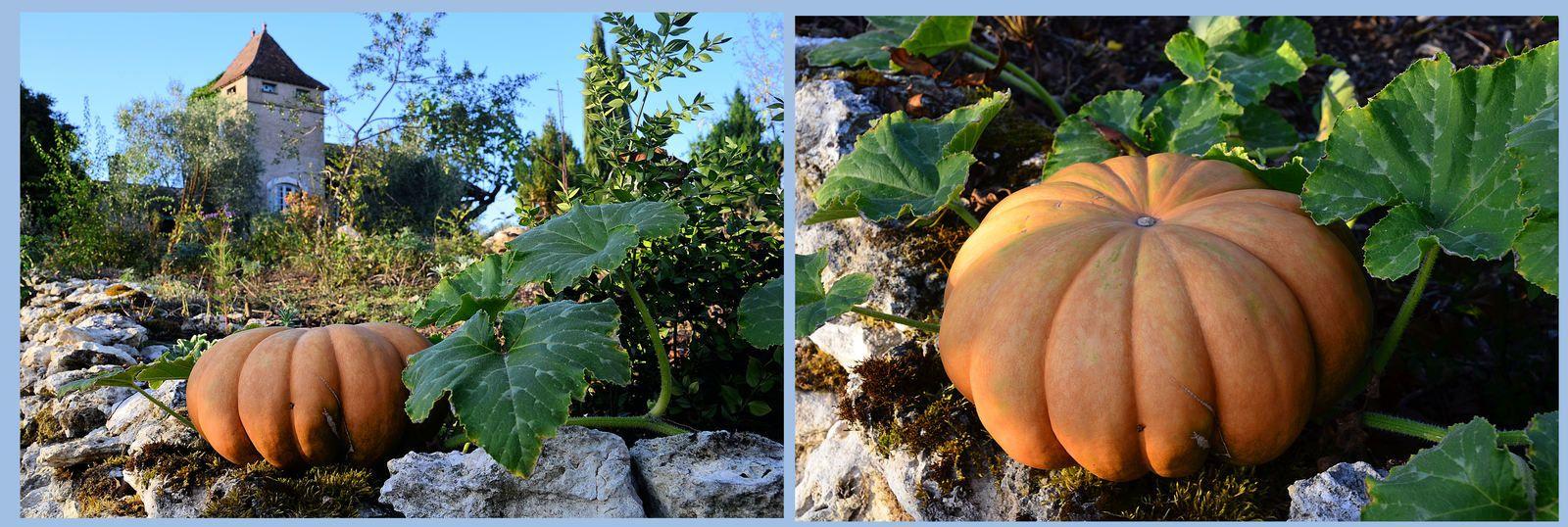Atelier &amp&#x3B; jardin - couleurs d'automne !