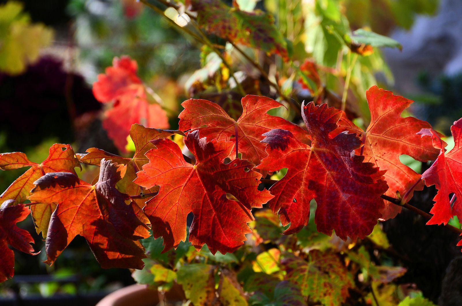 Couleurs d'automne - atelier et jardin