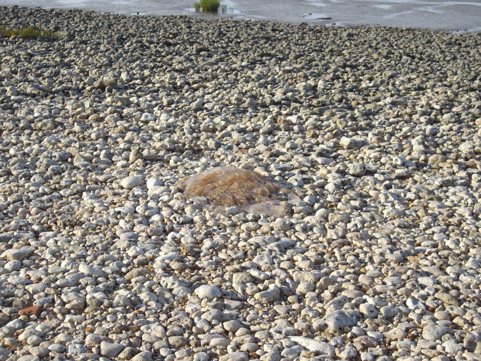 les rochers,les carrelets ,le coucher du soleil et des méduses échouées sur la passe aux boeufs reliant l'ile au continent à marée basse...