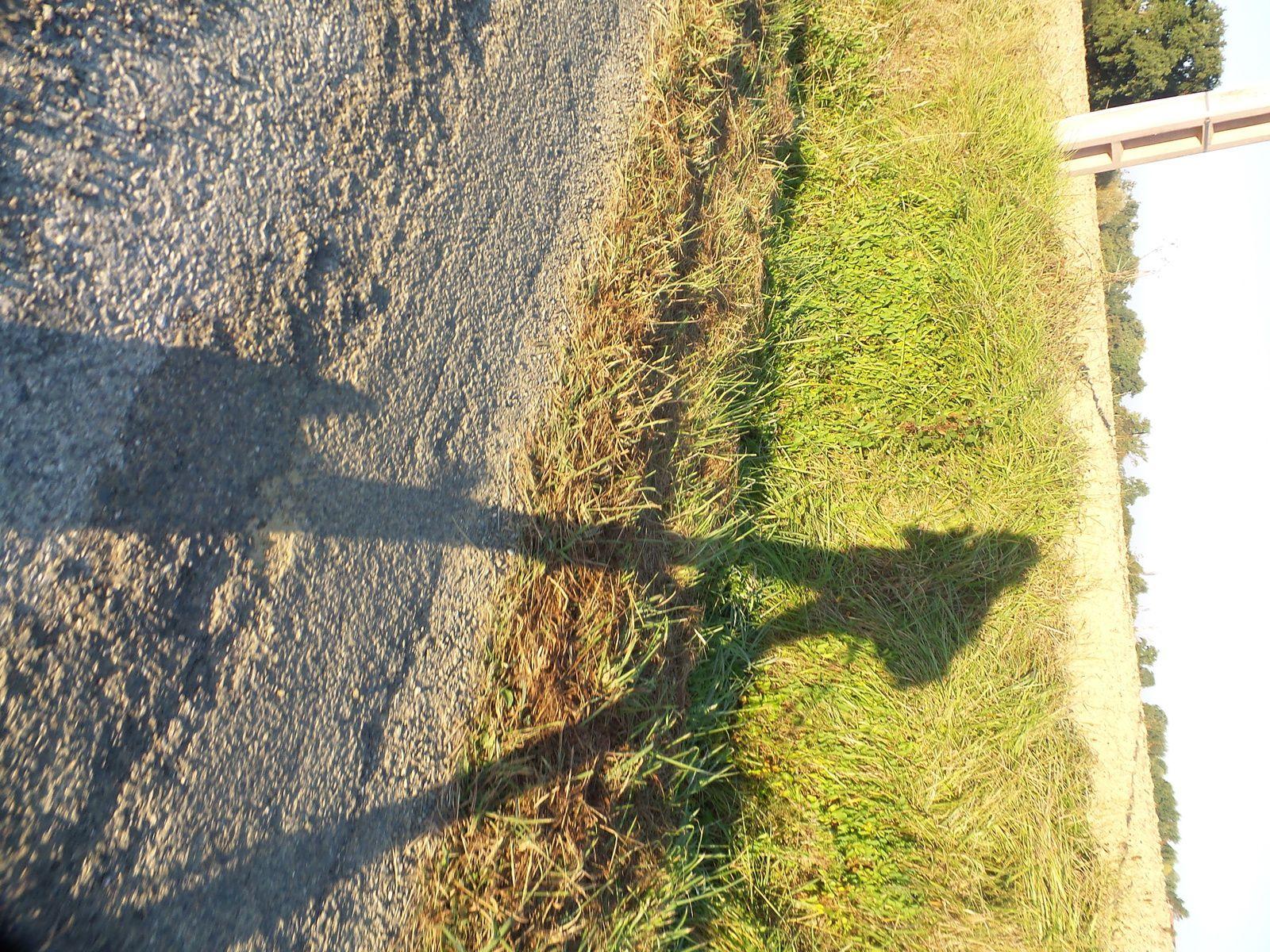 Jour 26 Eauze à Nogaro 19 km