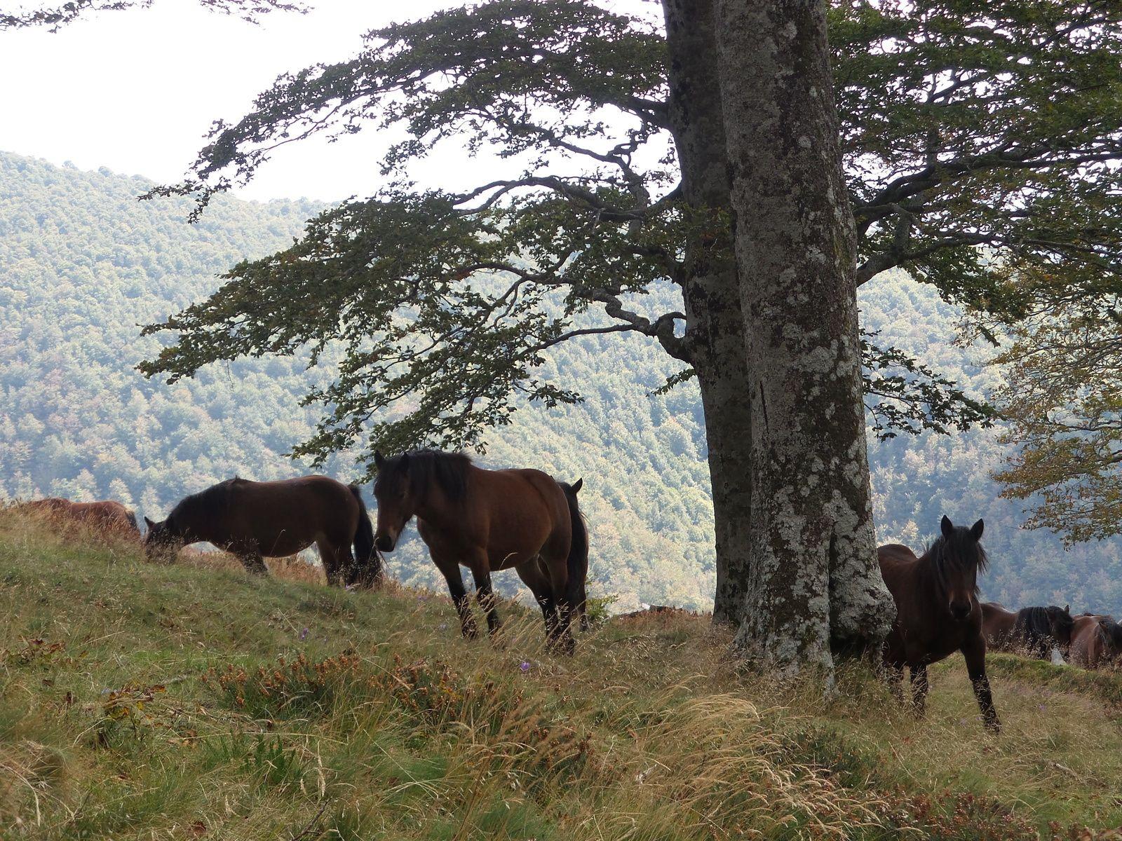 Compostelle traversée des Pyrénées