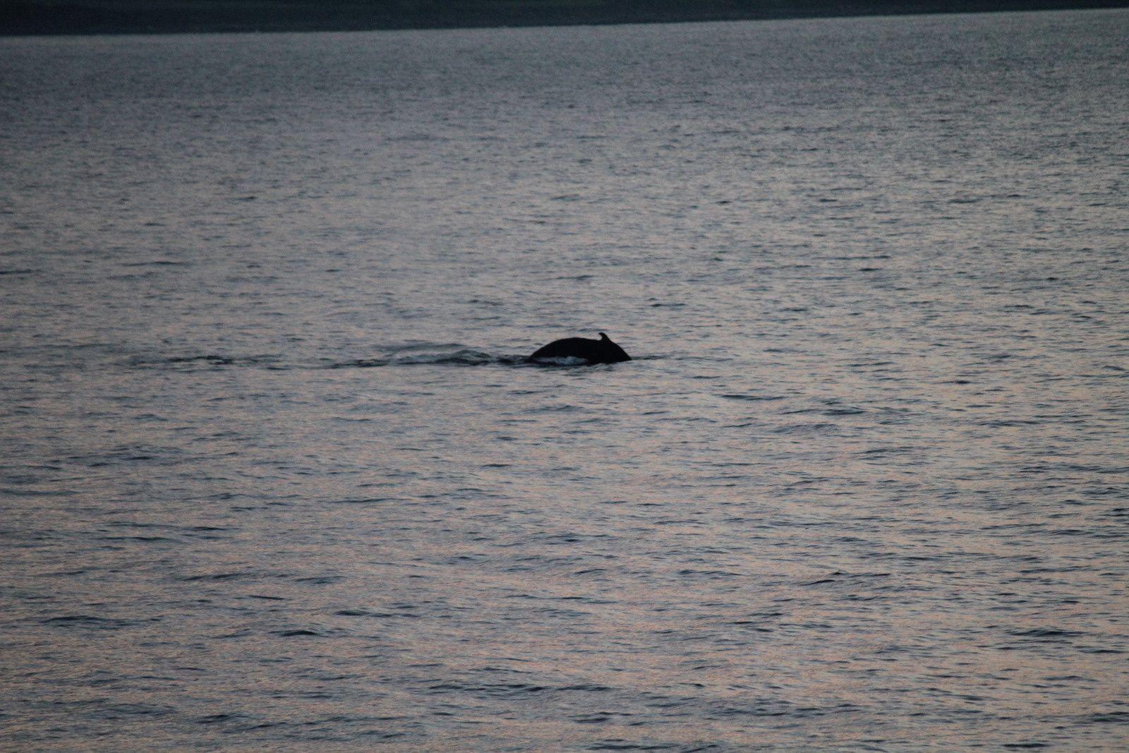 Hourra! J'ai vu une baleine!