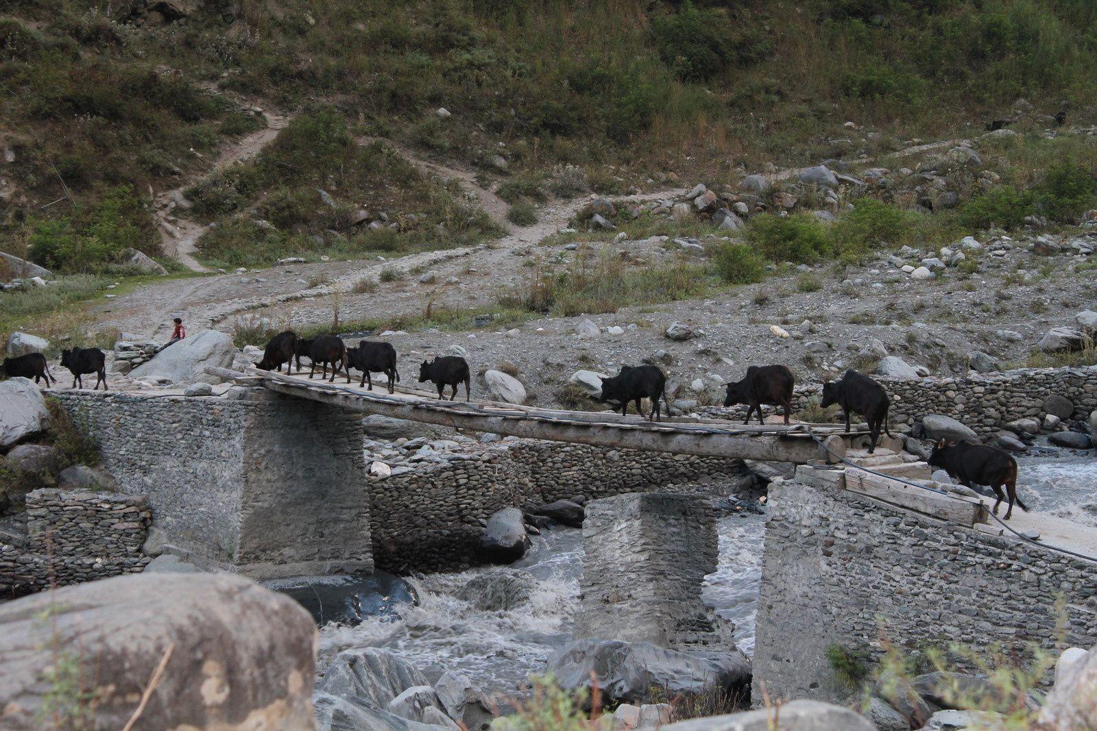 Ce pont au-dessus d'une rivière déchaînée qui relie les 2 rives du village semble précaire mais avec le traffic qui passe (troupeaux de chèvres, moutons, vaches), il a fait ses preuves!