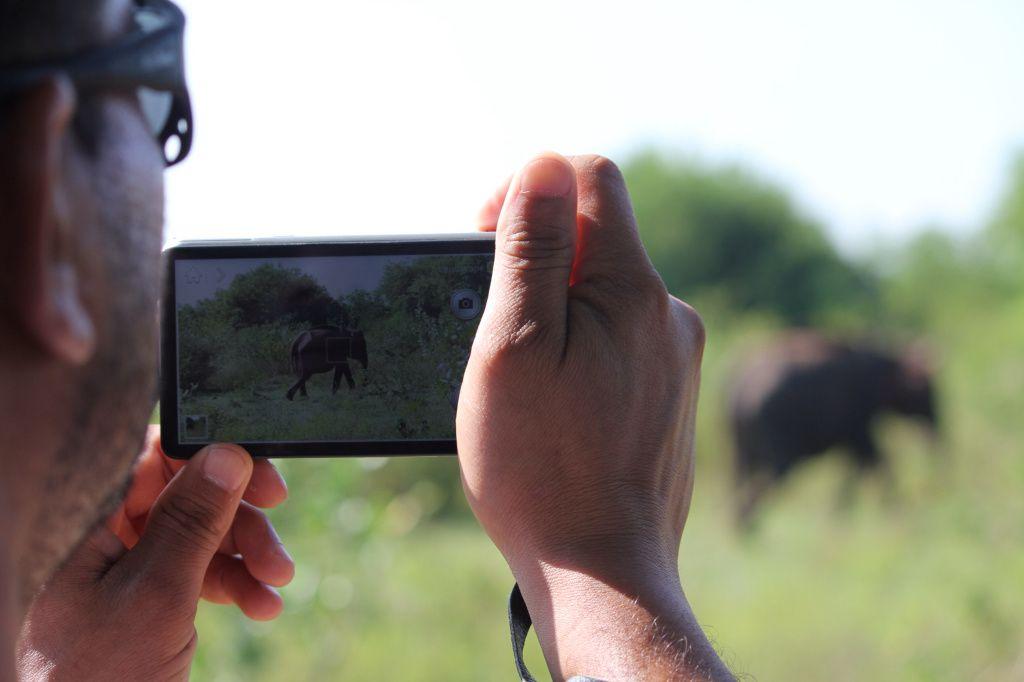 Les éléphants au parc national de Uda Walawe Jour 11