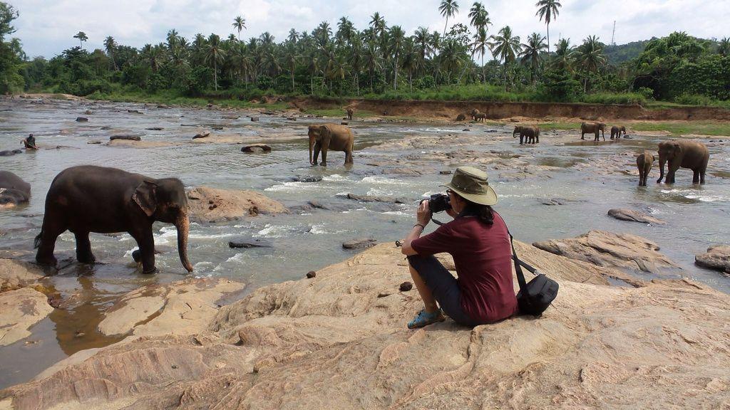 Les éléphants de Pinnewala et jardin botanique Jour 8