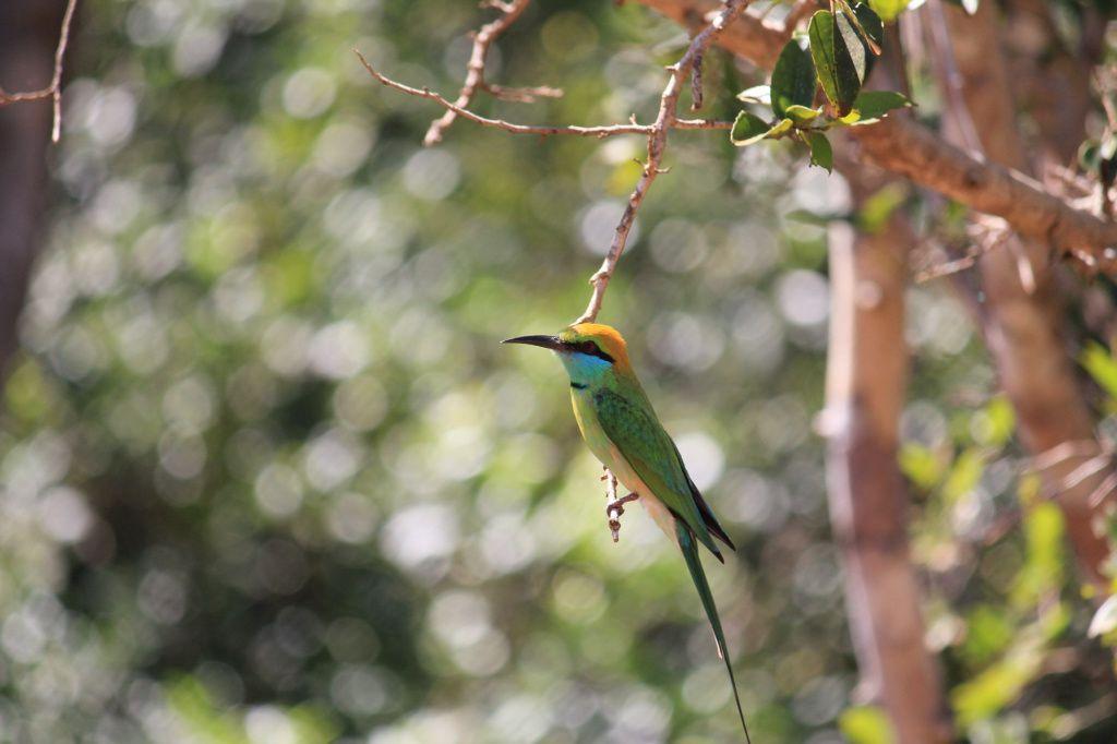 Jeep safari et Anuradhapura Jour 5