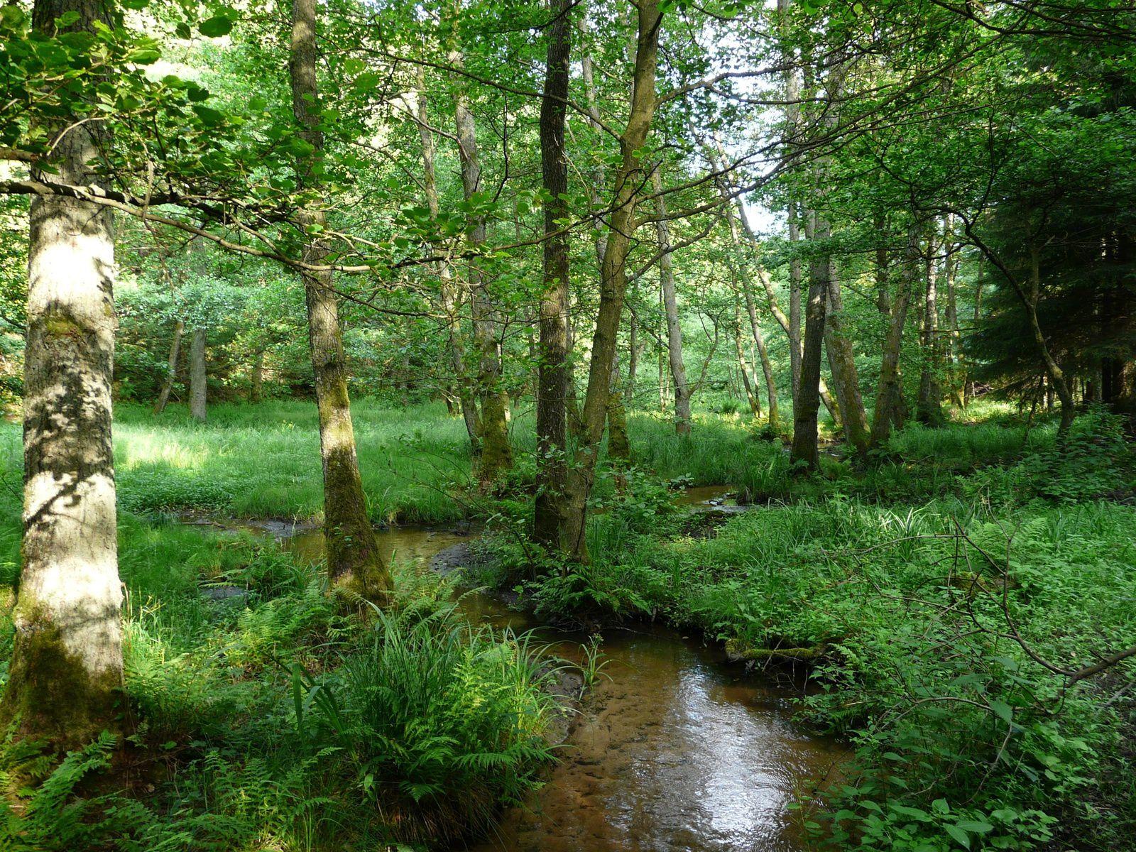 Rivières Sauvages : redonnons vie à nos cours d'eau, zones humides ... mode emploi !!