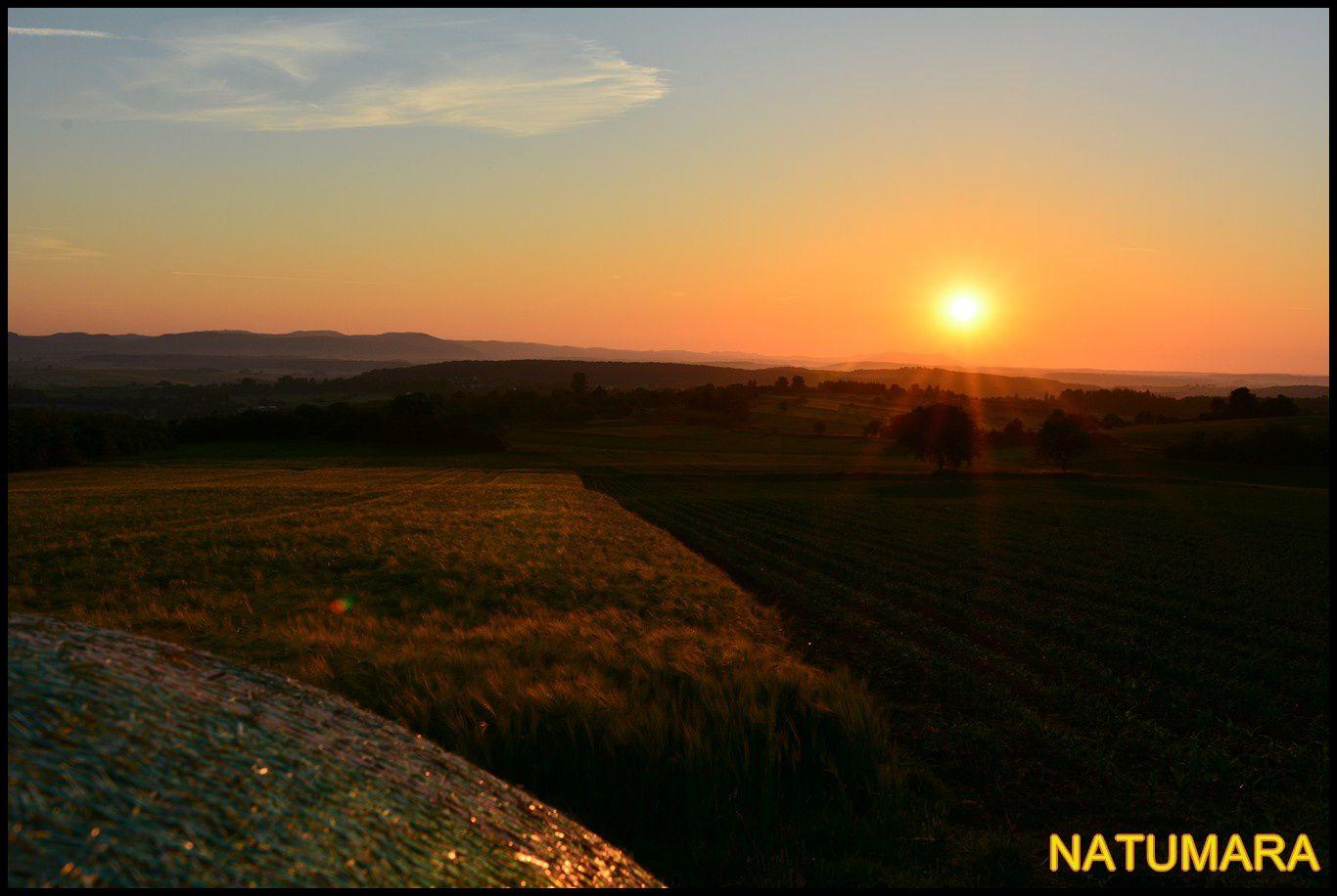 Autrefois, les champs de blé se paraient de toutes les couleurs...