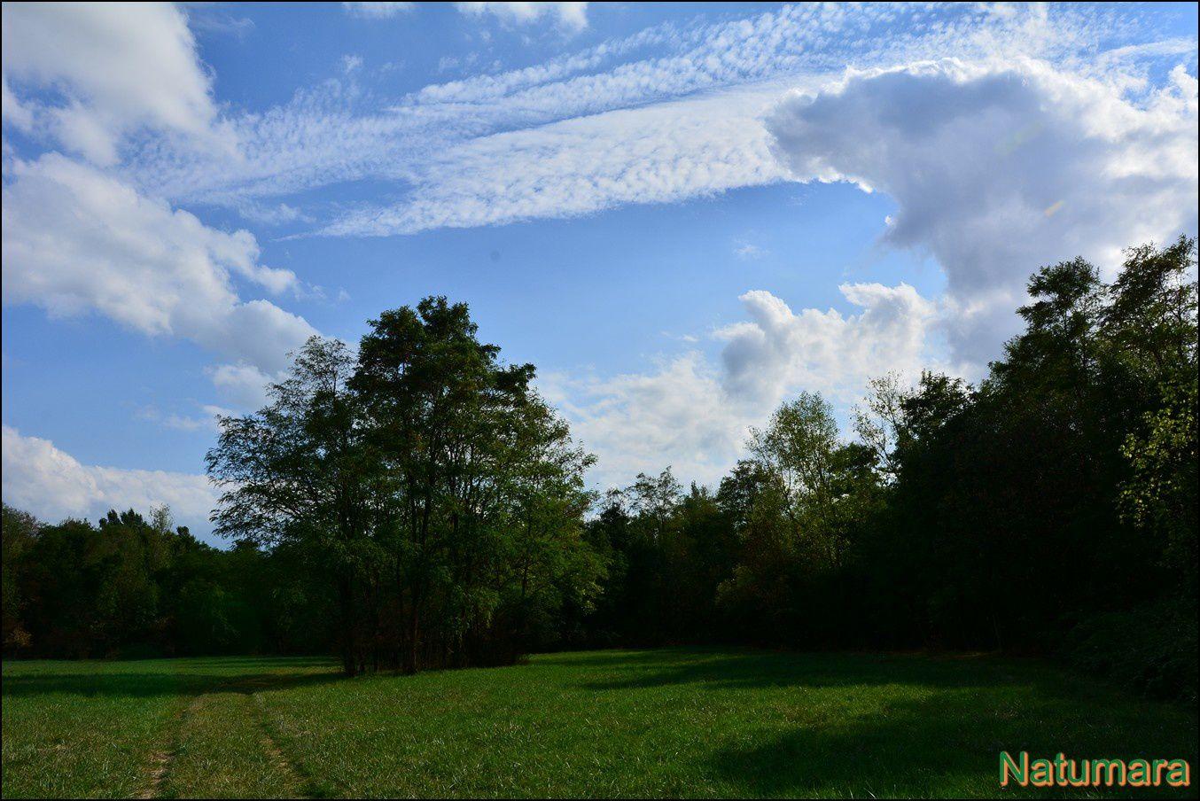 Le Ried de la Bruche : un paradis sacrifié...