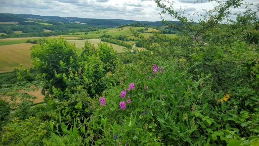 Vezelay and CO
