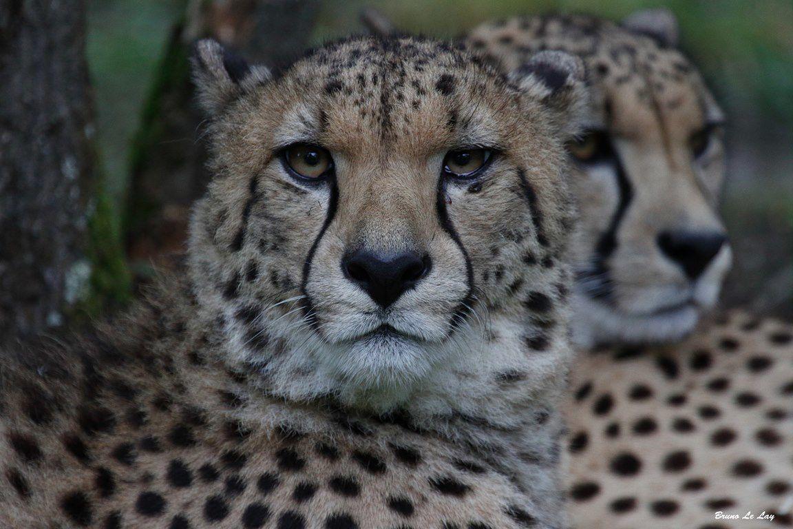 Safari.... en loire atlantique (Planète sauvage)