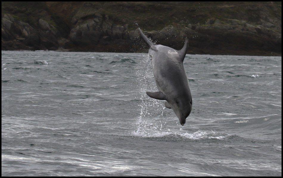 A la découverte de la faune en mer d'Iroise ...